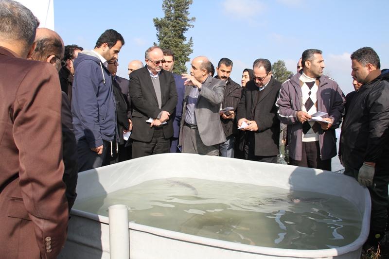 افتتاح یک طرح بین المللی شیلات در گیلان با حضور استاندار