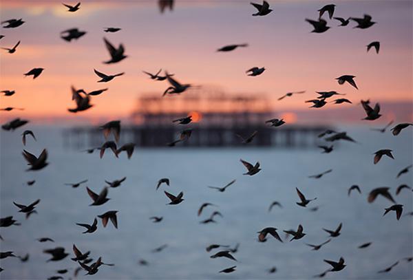 ورود پرندگان پیش قراول مهاجر به تالابهای گیلان