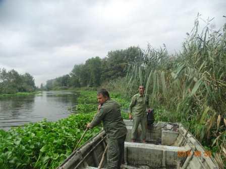 استمرار  پاکسازی گیاه مهاجم  سنبل آبی در لنگرود