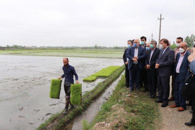 توصیه مهم استاندار به کشاورزان برای انجام نشاء برنج مطابق با تقویم زراعی / تداوم حمایت از توسعه مکانیزاسیون در فرآیند تولید محصول