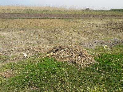 جلوگیری از تصرف اراضی تالاب انزلی توسط مامورین یگان حفاظت محیط زیست شهرستان رشت