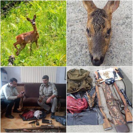 دستگیری شکارچیان شوکا در سیاهکل